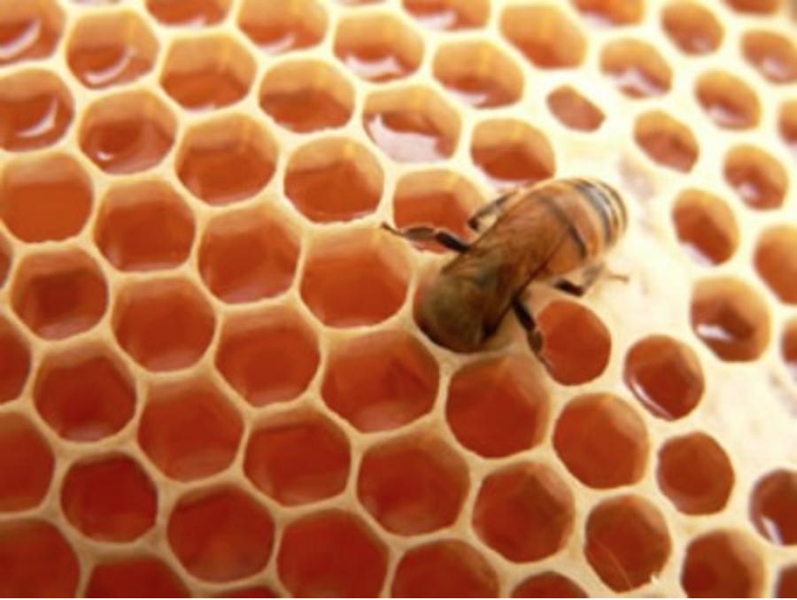 Cera virgen de abejas